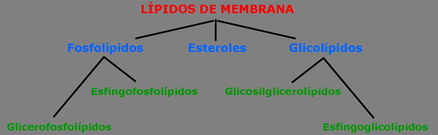 Membranas Composición