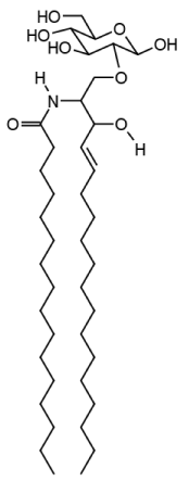 Esfingolipidos Funcion Pdf